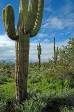 Cactus-02573